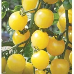 Semi pomodoro ciliegino bianco