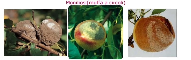 moniliosi