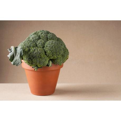 Pianta broccolo romano natalino Veronica F1