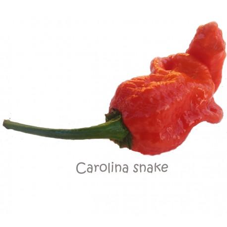 Semi Carolina Snake