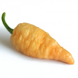 Semi Bengal naga peach