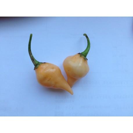 Semi Big Chupetinho Peach