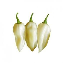 Semi Bhut Jolokia white