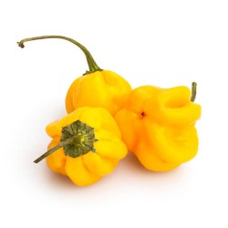 Habanero Yellow secco