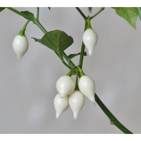 Semi Chupetinho White