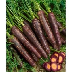 semi carota nera