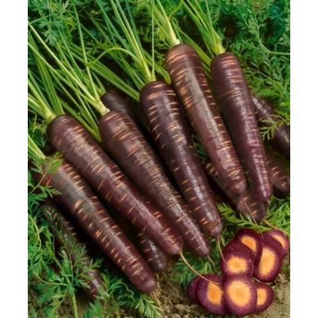 semi carota viola
