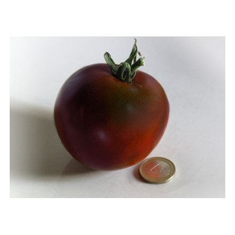 Semi pomodoro nero di Crimea