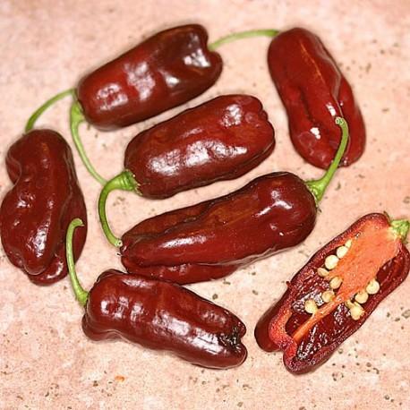 Semi habanero chocolate long