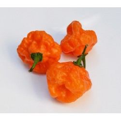 Semi habanero orange blob