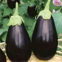 Semi melanzana nera