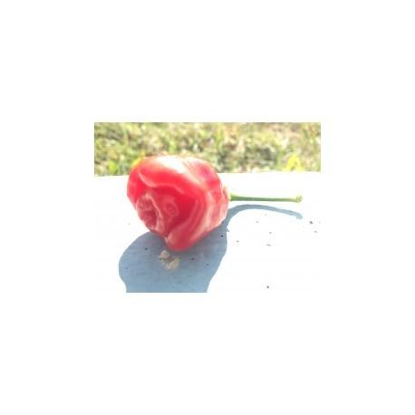 Black rose secco