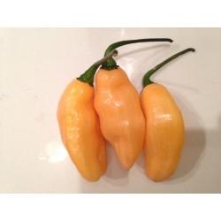 Pimenta de Neyde Yellow secco