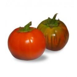 Semi melanzana rossa