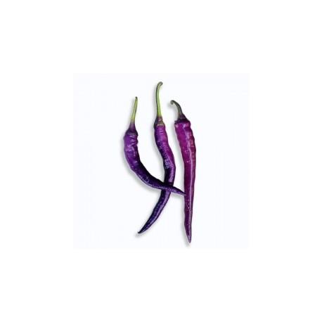 Cayenna Purple secco