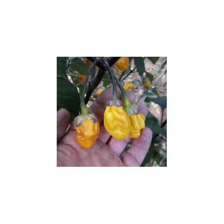 Semi puma bubblebum yellow