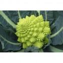 Semi di broccolo romano white gold