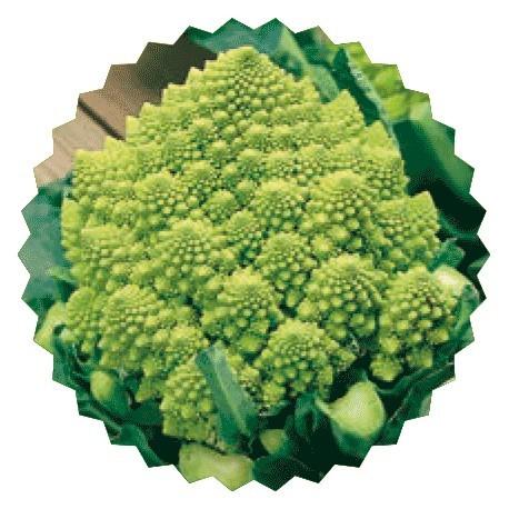 Semi di broccolo romano S. Giuseppe Colosseo