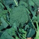 Semi di broccolo ramoso calabrese