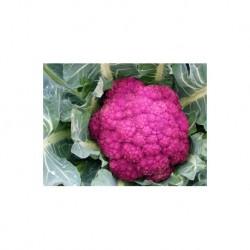 Semi di broccolo calabrese rosso