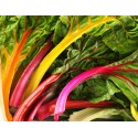 Semi di bietina da insalata multicolore