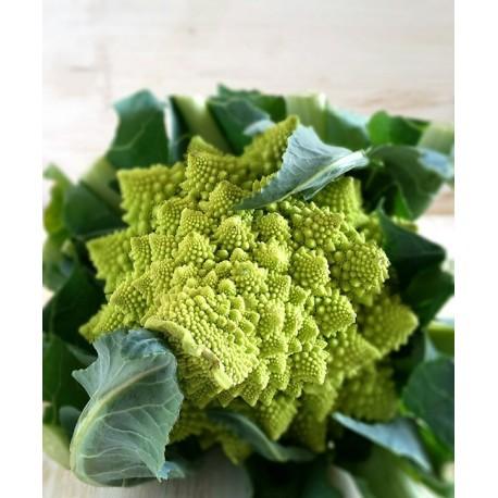 Semi di broccolo romanesco S. Giuseppe Lazio