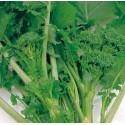 Semi di broccolo cima di rapa leccese