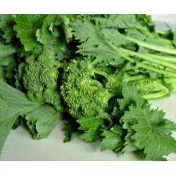 Semi di broccolo cima di rapa pugliese