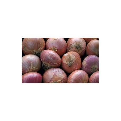 Semi di cipolla ramata di Montoro