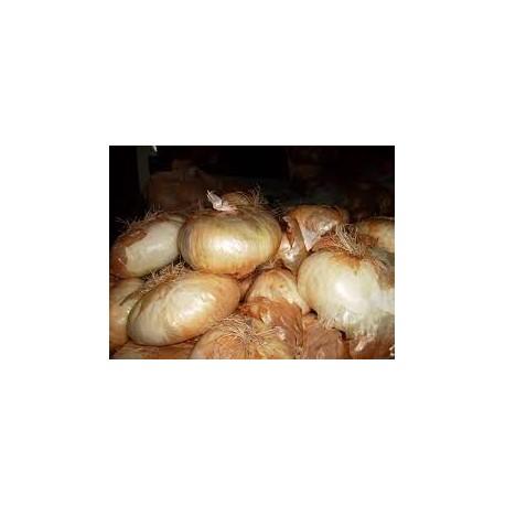 Semi di cipolla dolce giarratana