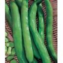 Semi fava Sciabola Verde