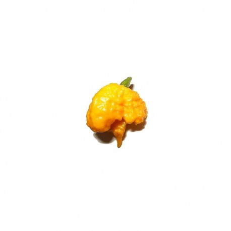 Semi Carolina reaper yellow