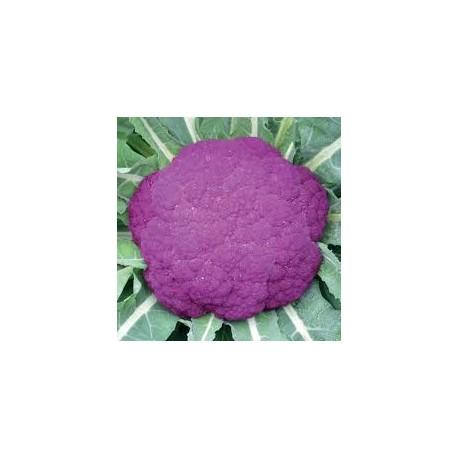 Semi di cavolfiore violetto di Sicilia