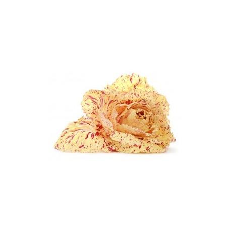 Semi di cicoria variegata di castelfranco