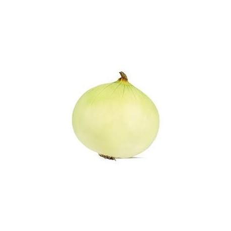 Semi di cipolla bianca Musona