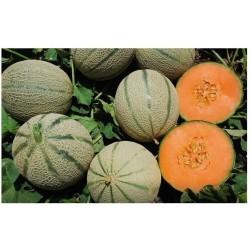 Semi Melone Francesino