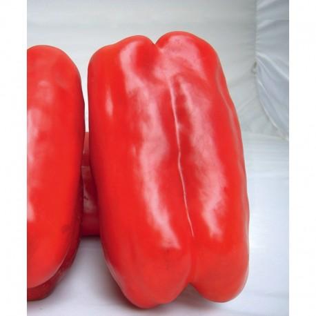 Semi Peperone Rosso Lungo Brace