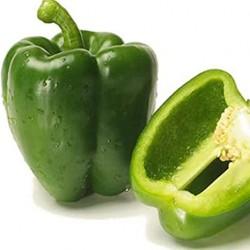 Semi Peperone Quadrato Verde Casanova
