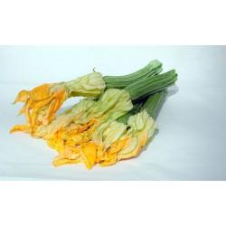 Semi zucchina romanesca