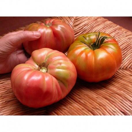 Semi di pomodoro di Sorrento
