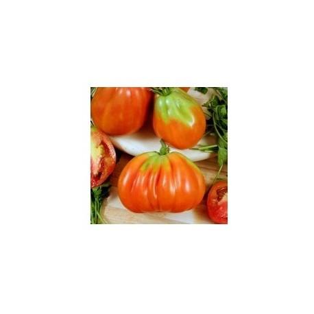 Semi di pomodoro cuor di bue riviera cuorbenga