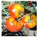 """Semi di pomodoro cuor di bue """"Rosettano"""""""