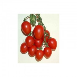 """Semi di pomodoro tipo pachino """"Elisir"""""""