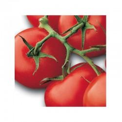 """Semi di pomodoro a grappolo rosso """"Horus"""""""
