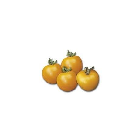 """Semi di pomodoro giallo d'inverno """"Ponderosa"""""""