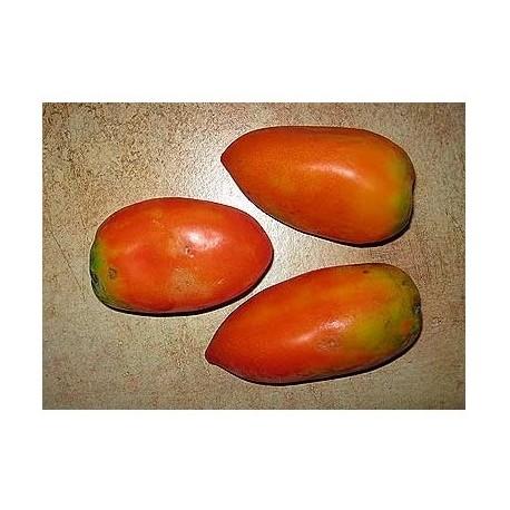Semi di pomodoro nasone