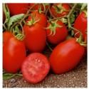 Semi di pomodoro allungato tipo Roma