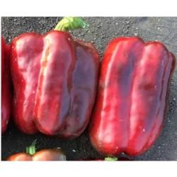 Semi Peperone Quadrato Rosso Lido