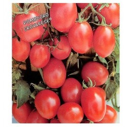 Semi di pomodoro grappolo da appendere crovarese