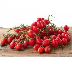 Semi di pomodoro a grappolo fiaschetto